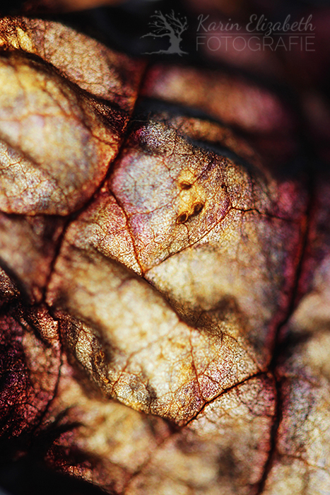 20150507-post-botany1