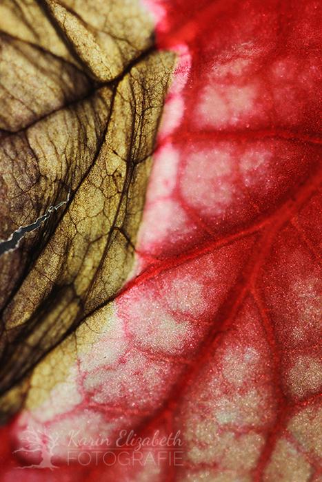 20150507-post-botany2