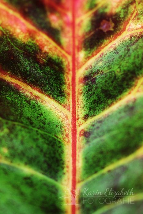 20150507-post-botany4